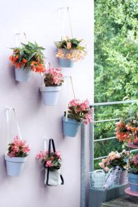 Begonia-Balkonplant-van-het-jaar-Equalize-09-MR - kopie