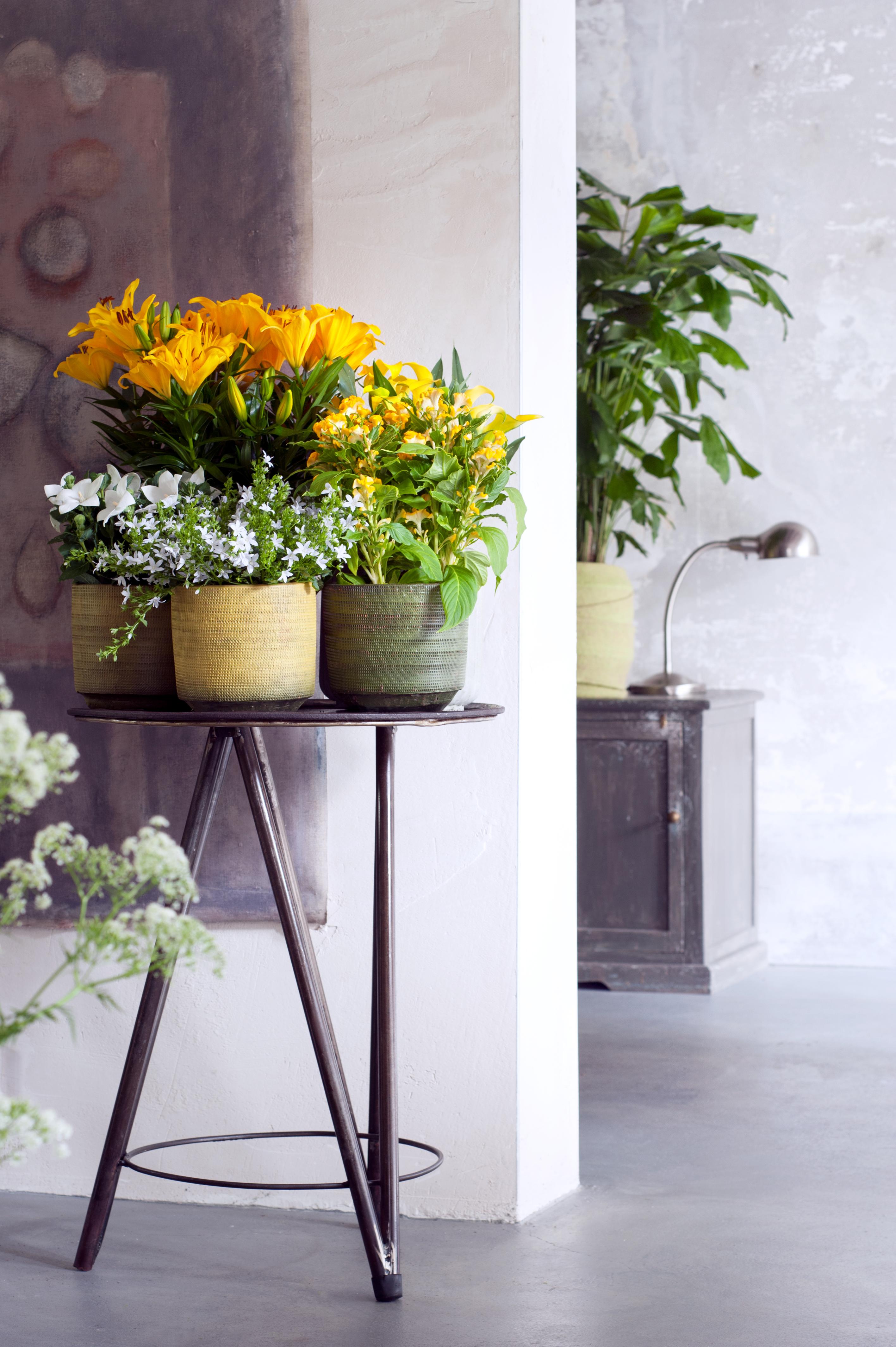 Binnenstebuiten-planten-05-2017-8 - kopie - kopie